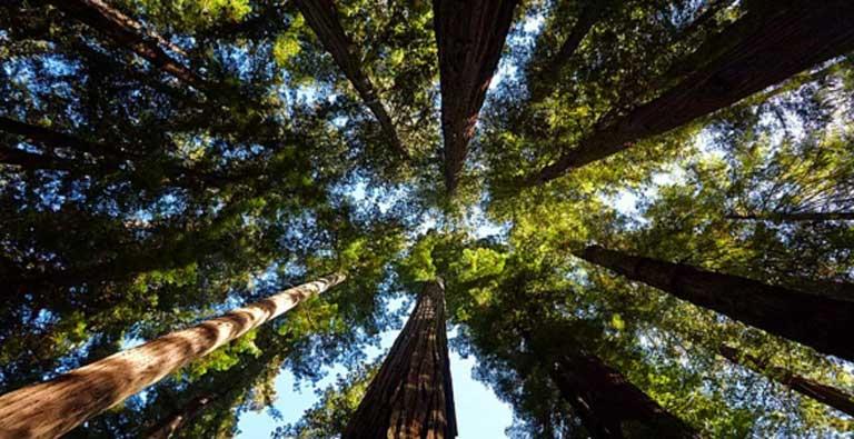 Redwood Milli Parkı