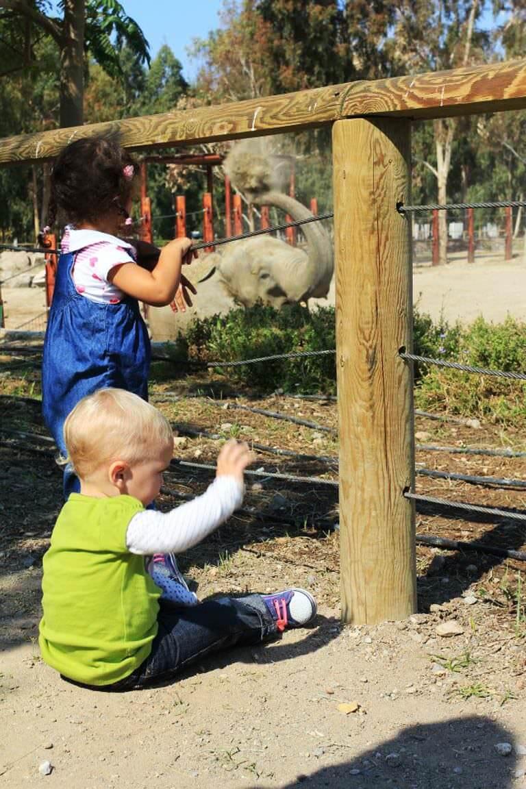 dogal-yasam-parki-filleri