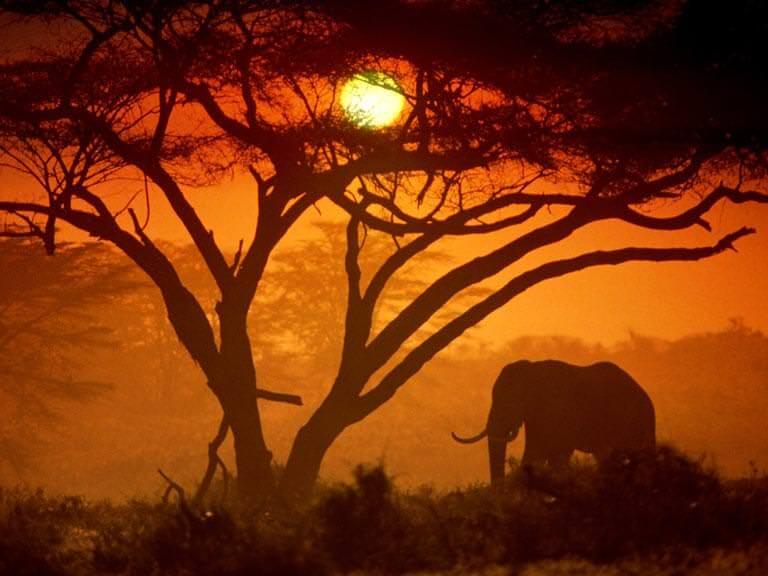 Kenyadaki ulusal parklar