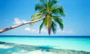 Dominik adaları
