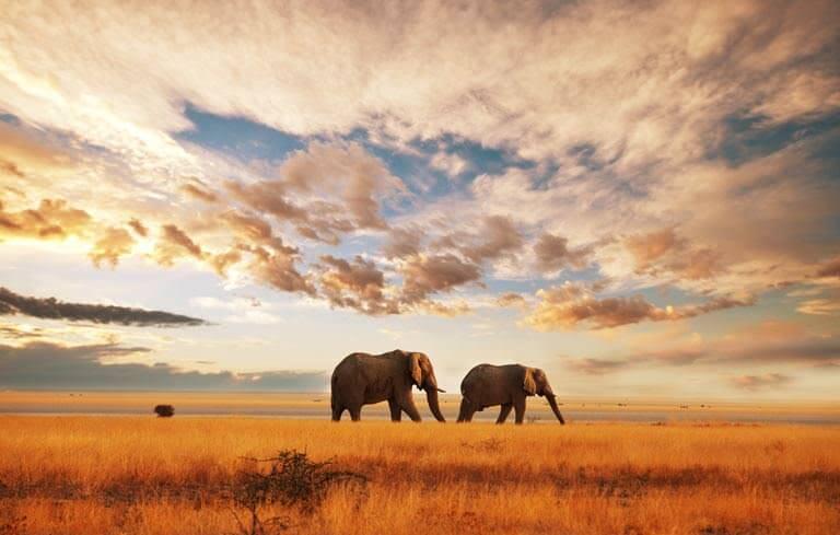 kenyadaki filler