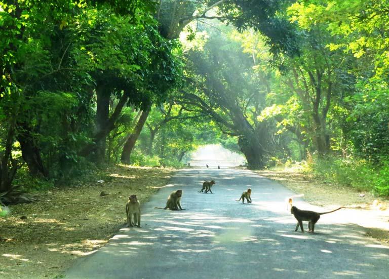Mumbai'de Vahşi Yaşam: Sanjay Gandhi Milli Parkı
