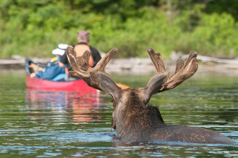 Kanada'nın En Huzurlu Yeri: Algonquin Eyalet Parkı