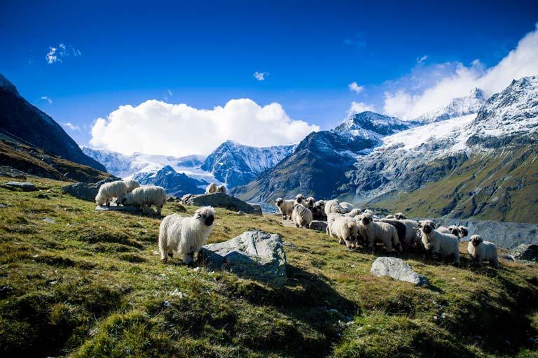 Zermatt'ta Mutlaka Gezmeniz Gereken 7 Yer